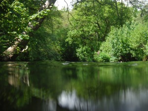 Green stillness