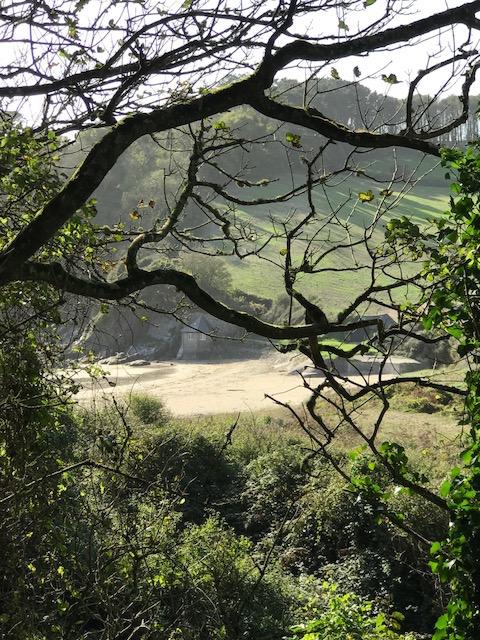 Mothecombe Wood.jpg